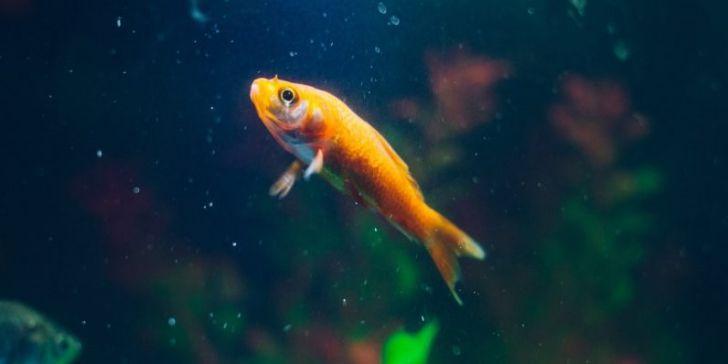 casino hack fish tank